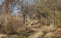 Gödöllő, Erzsébet-park