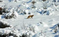Tél,Szováta