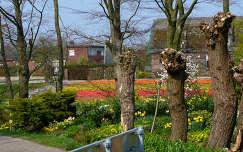 Nederlandse Bloembollenvelden, MADE BY ELLY HARTOG