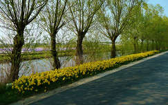 Holland, Bloembollen velden
