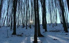 Zempléni erdő télen