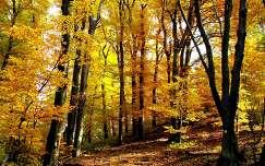 ősz a vértesben