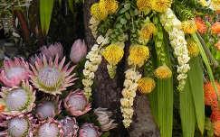 Virágok Madeiráról