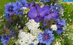 búzavirág vadvirág virágcsokor és dekoráció