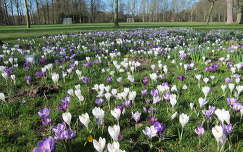 Haarlem, Park, Crocusveld