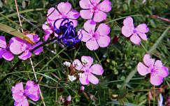 Hegyi virág