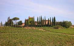 szőlőültetvény toszkána olaszország fasor