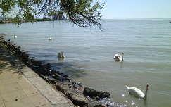 Keszthelyi Balaton