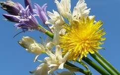 pitypang vadvirág virágcsokor és dekoráció