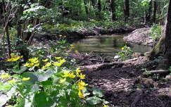 gólyahír patak tavasz erdő vadvirág
