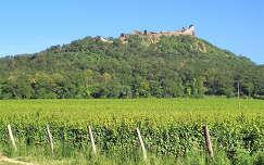 szőlőültetvény magyarország várak és kastélyok