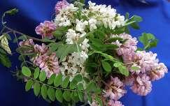Akácvirágok