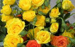 Bogi rózsacsokra