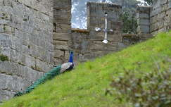 Warwick kastély, Anglia