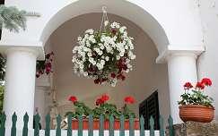 Magyarország, Tihany, virágos porta