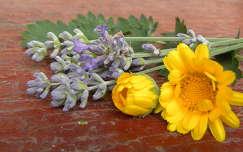 körömvirág és levendula