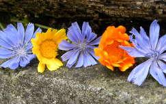 körömvirág és katáng