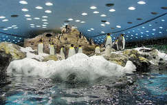 pingvin madár