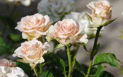 Rózsaszín rózsák csokorban