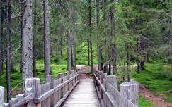 Erdei híd.Dél-Tirol.