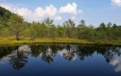 Székely tó