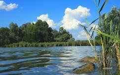 Cinkotai parkerdő-Naplás tó,Fotó:Szolnoki Tibor
