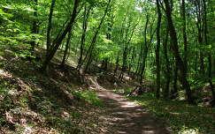 Pécs, Mecsek, erdőrészlet, út