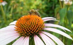 virág,méh
