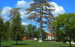 Óriás fenyő a gödöllői Grassalkovich királyi kastély udvarán,Fotó:Szolnoki Tibor