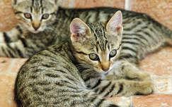 Két kiscica Zalátán