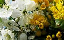 Virágzó meggy és magyal