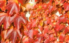 Őszi színek,Fotó:Szolnoki Tibor