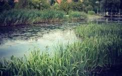Veszprém- Séd patak