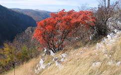 Karas völgy -ősszel