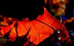 levél ősz fény árnyék