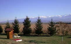 Erdély, fenyő, hegycsúcs, hó, fű, fa, Fogarasi havasok