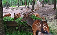 Magyarország, Budakeszi, Vadaspark