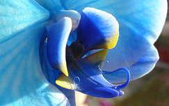 Kék színű orchidea