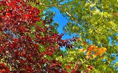 Az Ősz színei,Fotó:Szolnoki Tibor