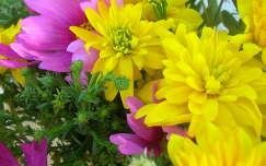 dália virágcsokor és dekoráció pillangóvirág