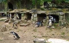Artis Zoo, Amsterdam, The Penguins   Appartementen