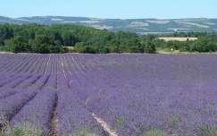 Provence Alpes-Côte d