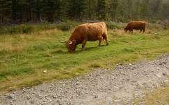 Dösen Tal, Karintia, Ausztria