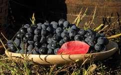 szőlő naplementében