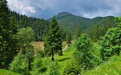 Gyilkos tó, Románia