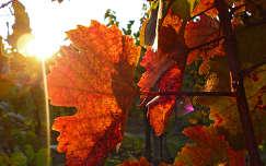 Lázi-Ősz