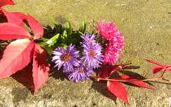 őszirózsa levél ősz