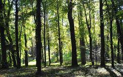 Alcsúti Arborétum, erdő