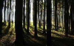 Erdőszélen...