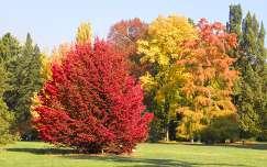 Szarvasi Arbor�tum